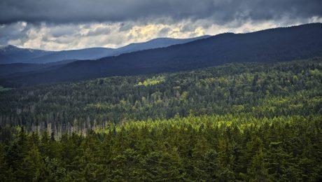 Artenreich: Der Bayerische Wald, hier bei Neuschönau. (Bild: Imago/Westend61)