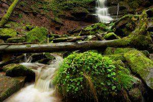 Natur pur: Wildbach im Naturpark Spessart, der zum dritten bayerischen Nationalpark werden könnte. (Foto: imago/Blickwinkel)