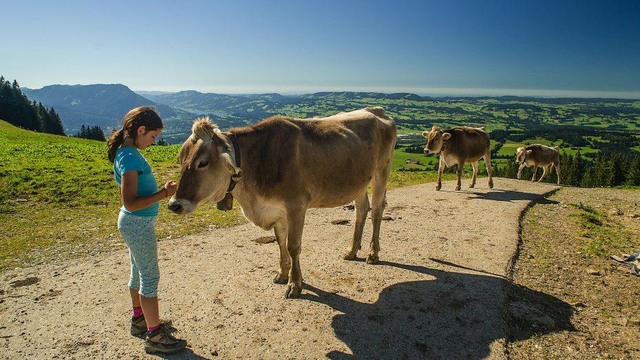 Bayern ist derzeit die Heimat von 109.200 Bauernhöfen. Sie tragen zum Erhalt der einzigartigen Kulturlandschaft des Freistaats bei, die zum Beispiel in den Allgäuer Alpen zu bewundern ist. (Bild: Imago/Kickner)