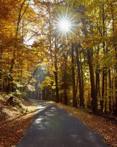 Goldene Aussichten: Straße im herbstlichen Spessart. (Bild: Imago/blickwinkel/R.Linke)
