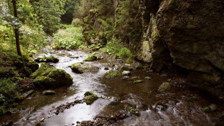 Das Pfeifen im Frankenwald