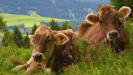 Politik für den ländlichen Raum