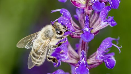 Der Kampf gegen das Insektensterben