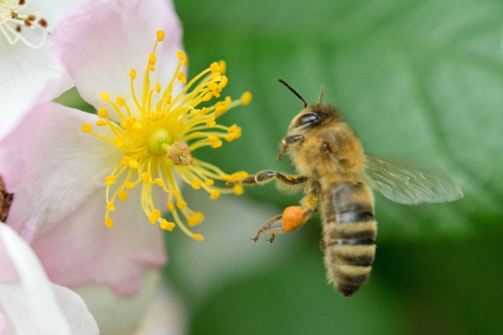 """Rettet Die Bienen: Volksbegehren: """"Rettet Die Bienen Und Die Bauern"""