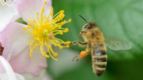 """""""Rettet die Bienen und die Bauern"""""""