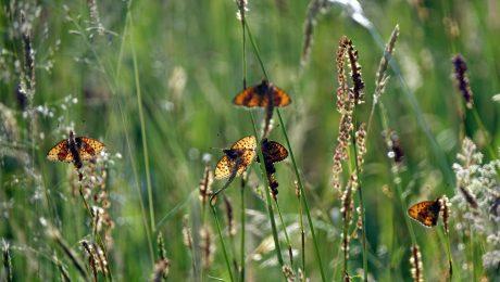 Auftakt zu mehr Artenschutz
