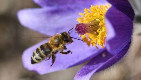 Punktlandung bei den Bienen
