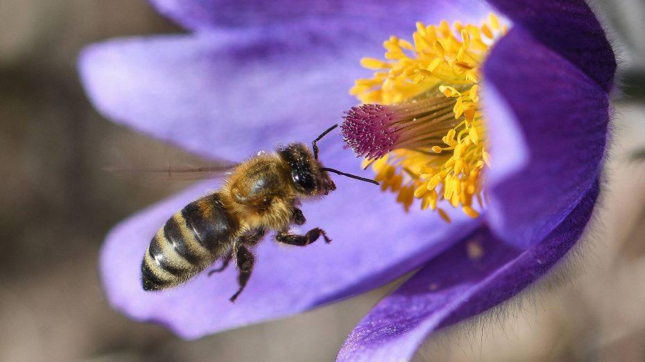 Bayern Bienen Abstimmung