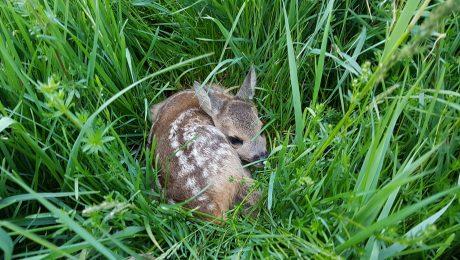 Rettet Bambi