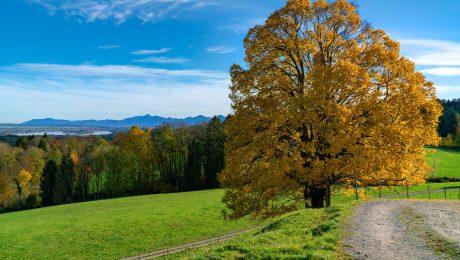 30 Millionen Bäume für Bayern