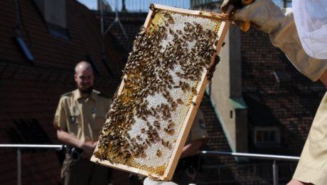 Nichts als Honig im Kopf