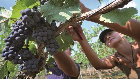 Junger Wein mit globalem Potenzial